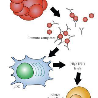 Systemic Lupus Erythematosus News, Research